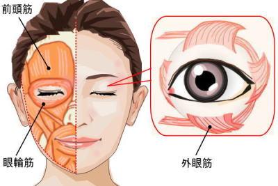 眼輪筋と外眼筋のトレーニングで魅力的な二重瞼に