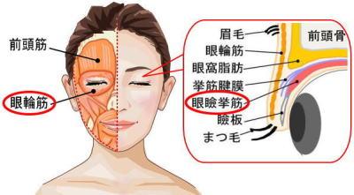 瞼の脂肪燃焼トレーニング1